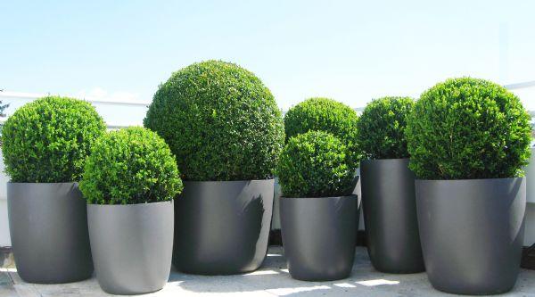 Terrassenbepflanzung2