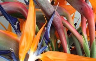 Strelizien Blumen Gesteck Unterseen Interlaken